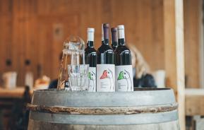 Wino Świętomarcińskie dostępne w Winnicy!